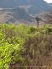 Sam Nail windmill spring (3)
