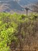 Sam Nail windmill spring (5)