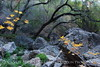 Cattail Falls canyon (1)