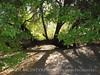 Bent Oak, Oak Creek