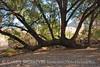 Bent Oak, Cattail Falls Tr (2)