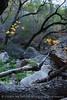 Cattail Falls canyon (6)