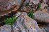 Cattail Falls canyon (16)
