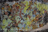 Lichens Chimneys
