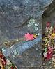 Bigtooth Maples Pinnacles Trail (14)