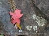Bigtooth Maples Pinnacles Trail (12)