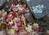 Bigtooth Maples Pinnacles Trail (10)