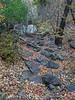 Dead Leaves Pinnacles Trail (1)