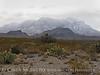 Snowy Chisos Feb 3 (13)