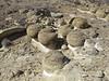 Croton Springs Cannonballs (4)