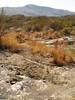 Glenn Springs late Dec 2010 (11)