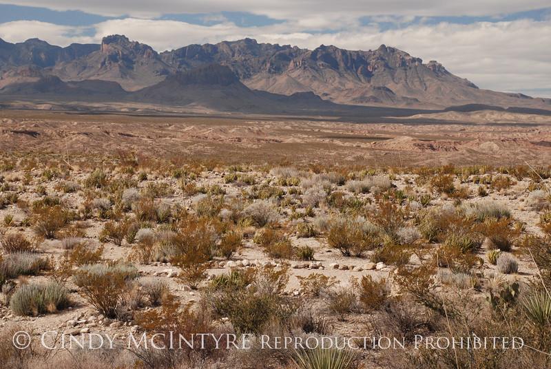 Camp de Leon backcountry site (15)