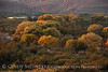 We do get a touch of autumn here when the cottonwoods along the Rio Grande turn gold.