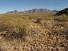 Burro Mesa between corral and red canyon (10)