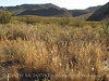 Burro Mesa between corral and red canyon (15)