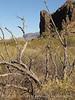 Burro Mesa between corral and red canyon (3)