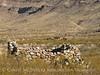 Tule Springs old dwelling (2)