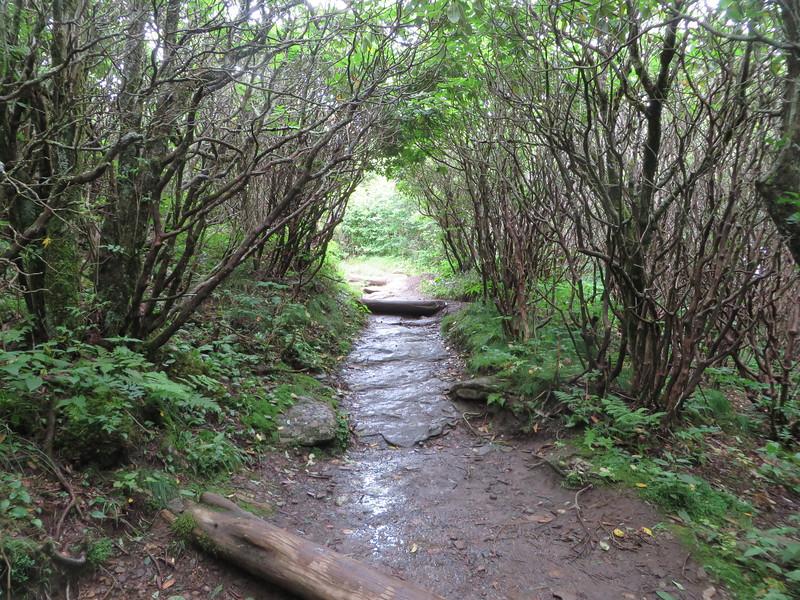 Birch Tunnel