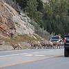Jasper traffic jam