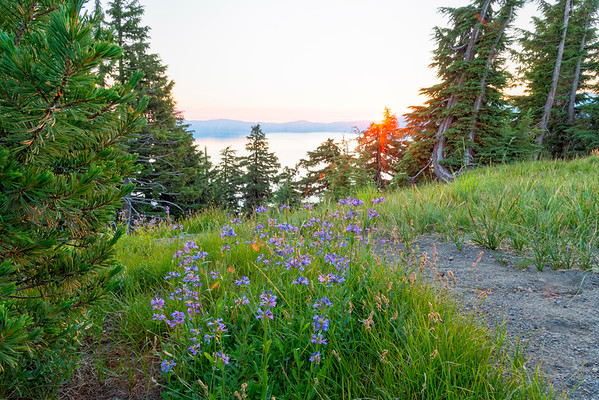 Crater Lake Sunrise Flowers - Crater Lake