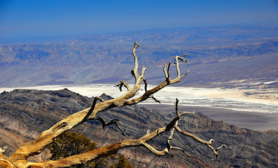 death-valley-wildrose-log