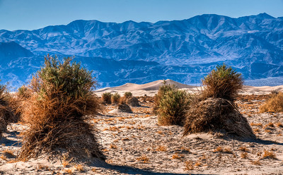 death-valley-cornfield