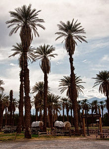 furnace-creek-date-grove-2