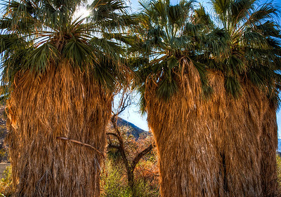 palm-tree-fronds