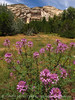 Rocky Mt beeplant, Josie's cabin, DINO UT (5)
