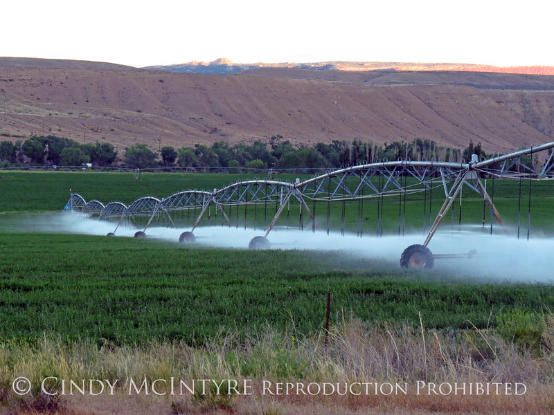 Irrigation sprinkler, Utah