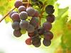 Grapes, Josie's Cabin, DINO UT (7)