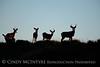 Mule deer silhouettes, DINO CO (9)