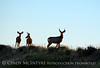 Mule deer silhouettes, DINO CO (4)