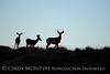 Mule deer silhouettes, DINO CO (6)