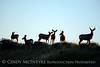 Mule deer silhouettes, DINO CO (3)