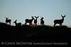 Mule deer silhouettes, DINO CO (1)