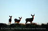 Mule deer silhouettes, DINO CO (9) copy