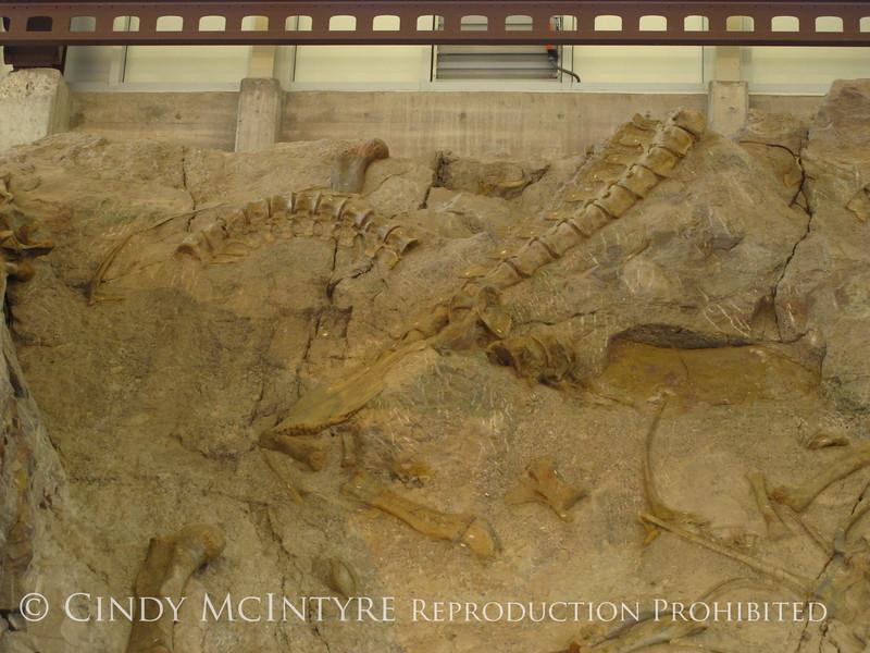 Quarry fossils, DINO UT (48)