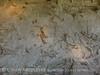 Quarry fossils, DINO UT (22)