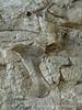 Quarry fossils, DINO UT (62)
