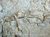 Quarry fossils, DINO UT (4)