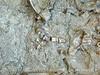 Quarry fossils, DINO UT (6)