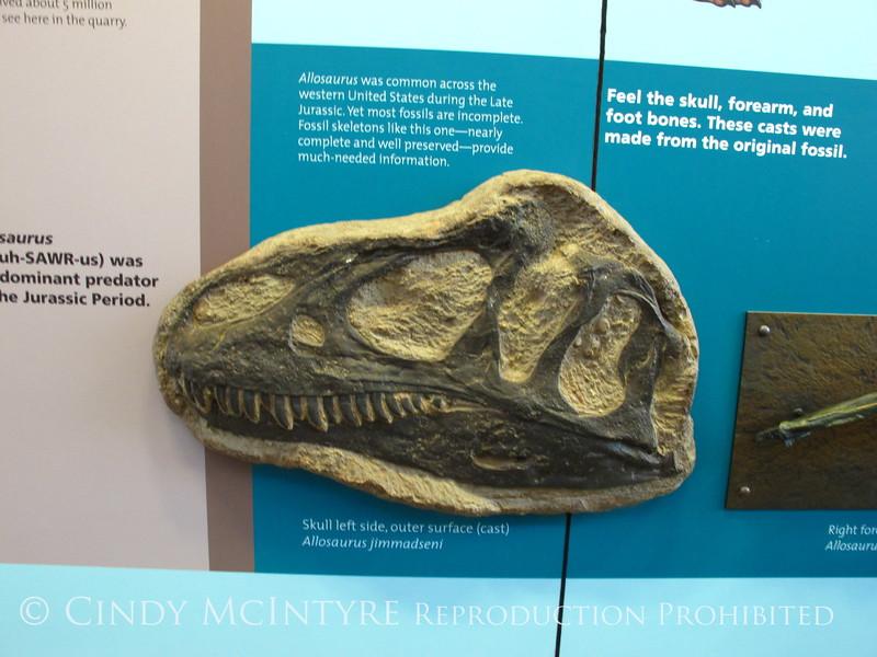Quarry fossils, DINO UT (66)