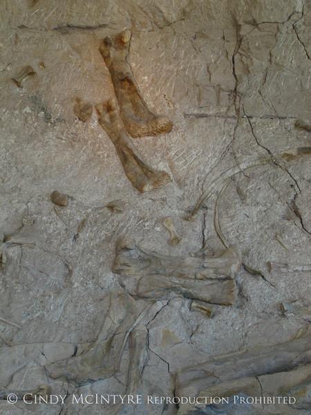 Quarry fossils, DINO UT (23)