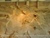 Quarry fossils, DINO UT (28)