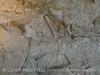 Quarry fossils, DINO UT (26)