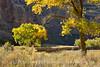 Autumn cottonwoods, Echo Park (18)