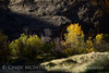 Autumn fm Echo Park campground, DINO CO (2)