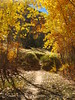 Autumn cottonwoods, Echo Park (29)