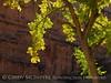 Autumn cottonwoods, Echo Park (36)